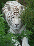 COLCHESTER ZOO - 60