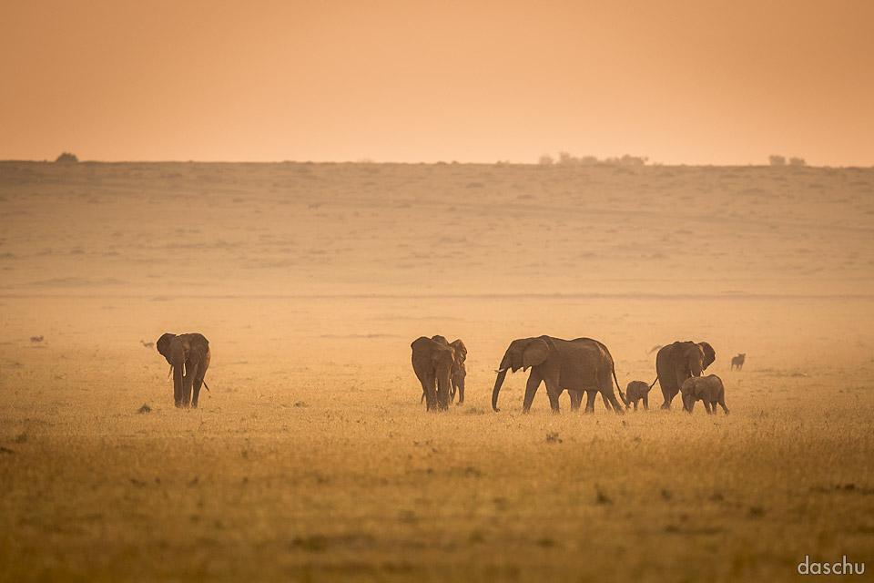 elephantastic morning by DaSchu