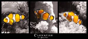 Clownfish by DolphyDolphiana
