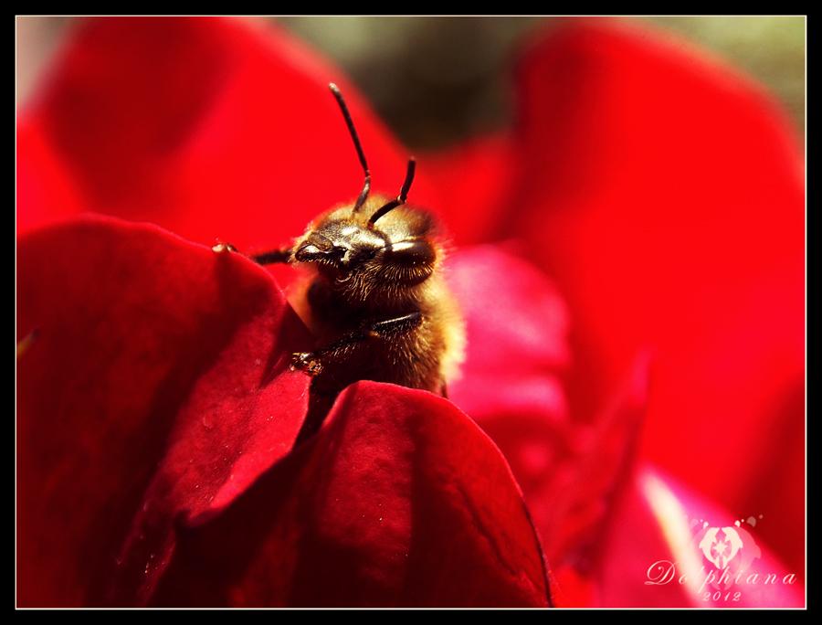 Hello Little Bee by DolphyDolphiana