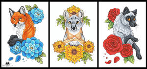 Flower Foxes - For Sale