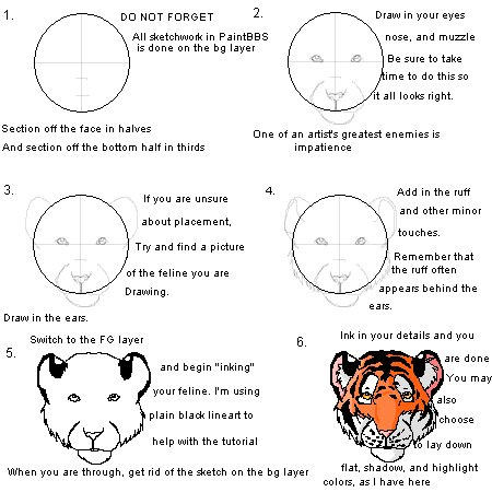 Tiger head drawing tutorial - photo#6