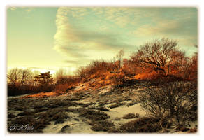 Plum Island by DethEternl