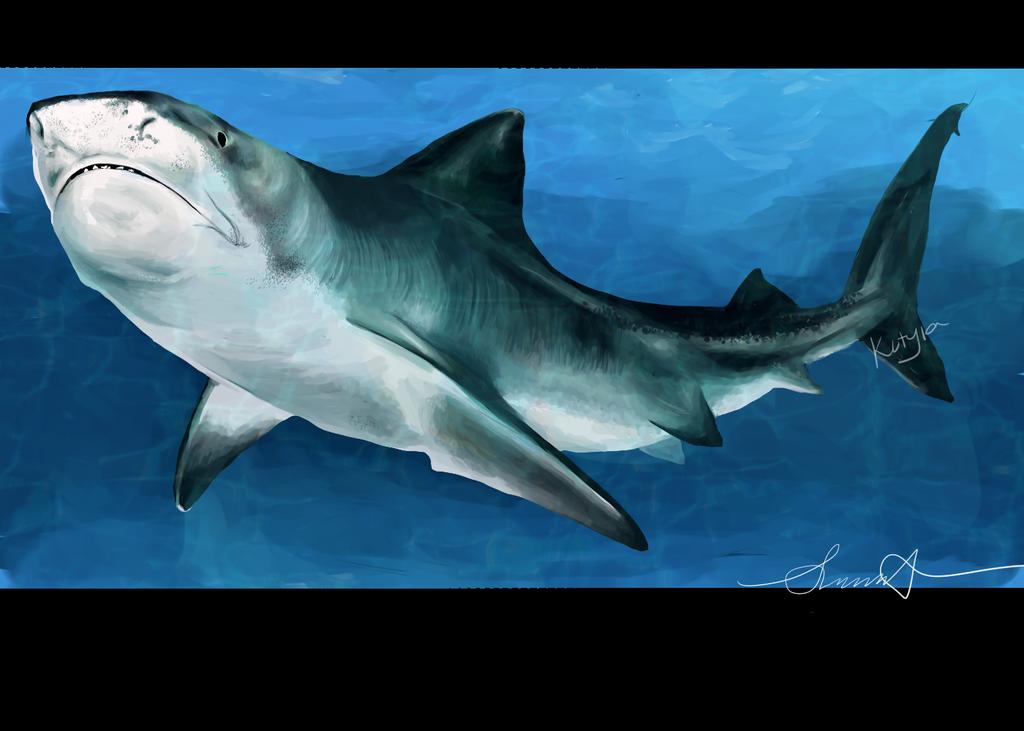 Tiger Sharko. by Kutyia
