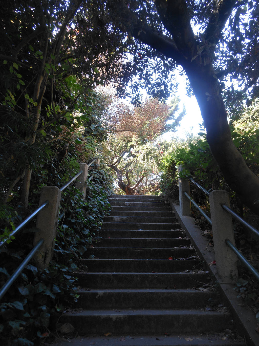 Climbing Up Telegraph Hill by discoinferno84
