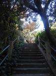 Climbing Up Telegraph Hill