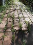 Follow The Mossy Brick Road