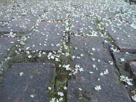 The Fallen Petals by discoinferno84