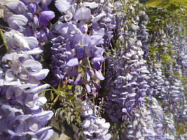 Walls Of Wisteria by discoinferno84