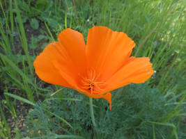 Spring In Orange by discoinferno84