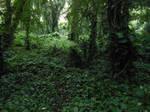 Honolua Bay Rainforest