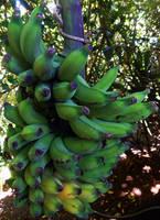 Hana Banana by discoinferno84
