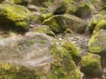Mossy Rocks