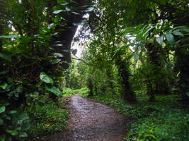 Honolua Trail by discoinferno84