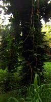Honolua Tree
