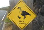 Haleakala Nene Crossing