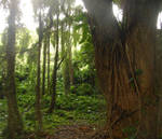 Under The Honolua Canopy