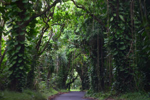 Into The Rainforest by discoinferno84