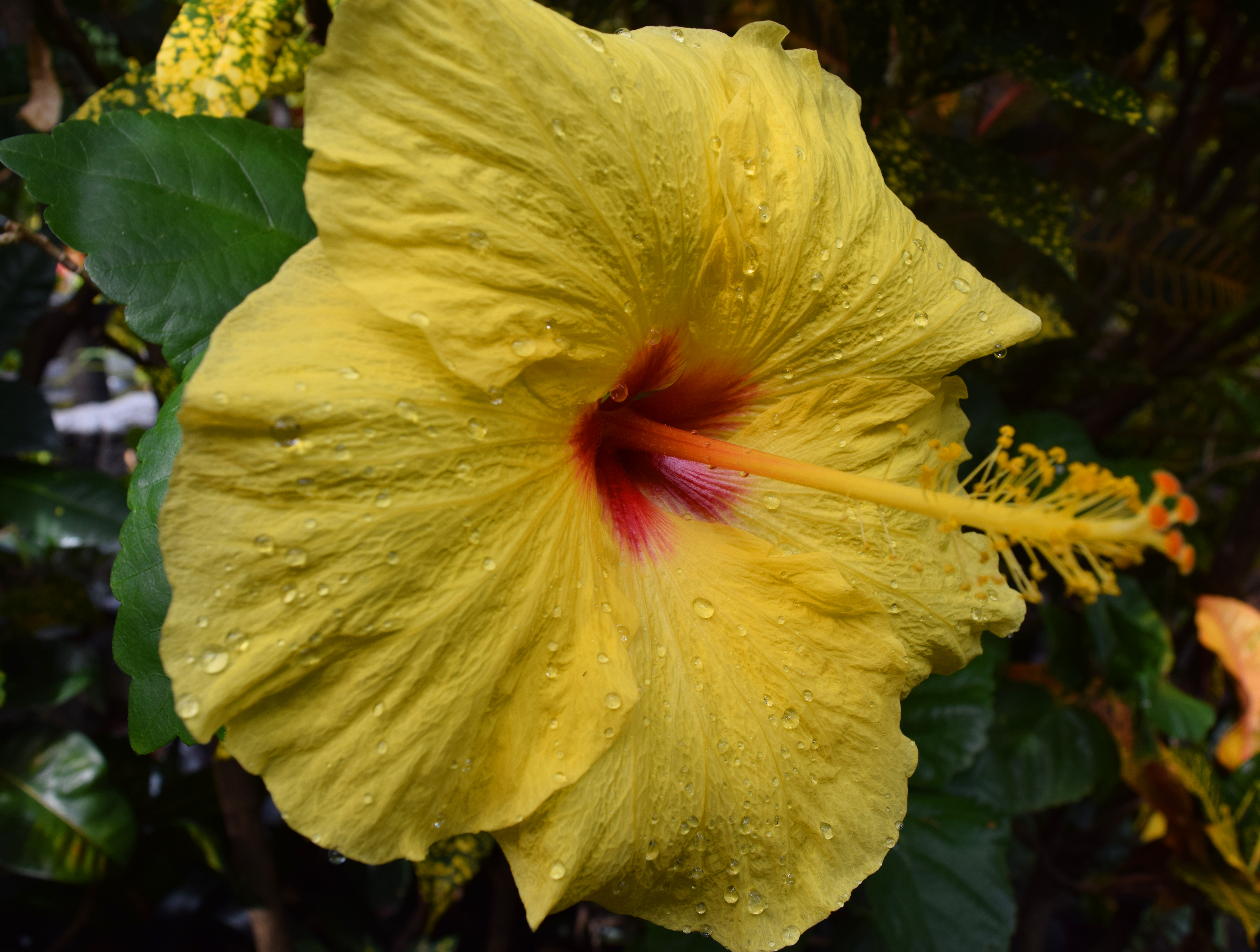 Wet Hibiscus by discoinferno84