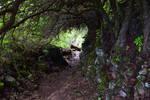 On The Awini Trail