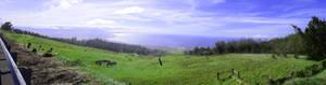 On Top Of Kohala