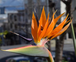 Bird of Paradise by discoinferno84