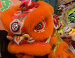 Red-Eyed Orange Lion
