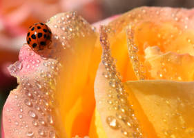 Ladybug Droplets by discoinferno84