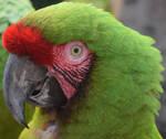 Parrot Profile