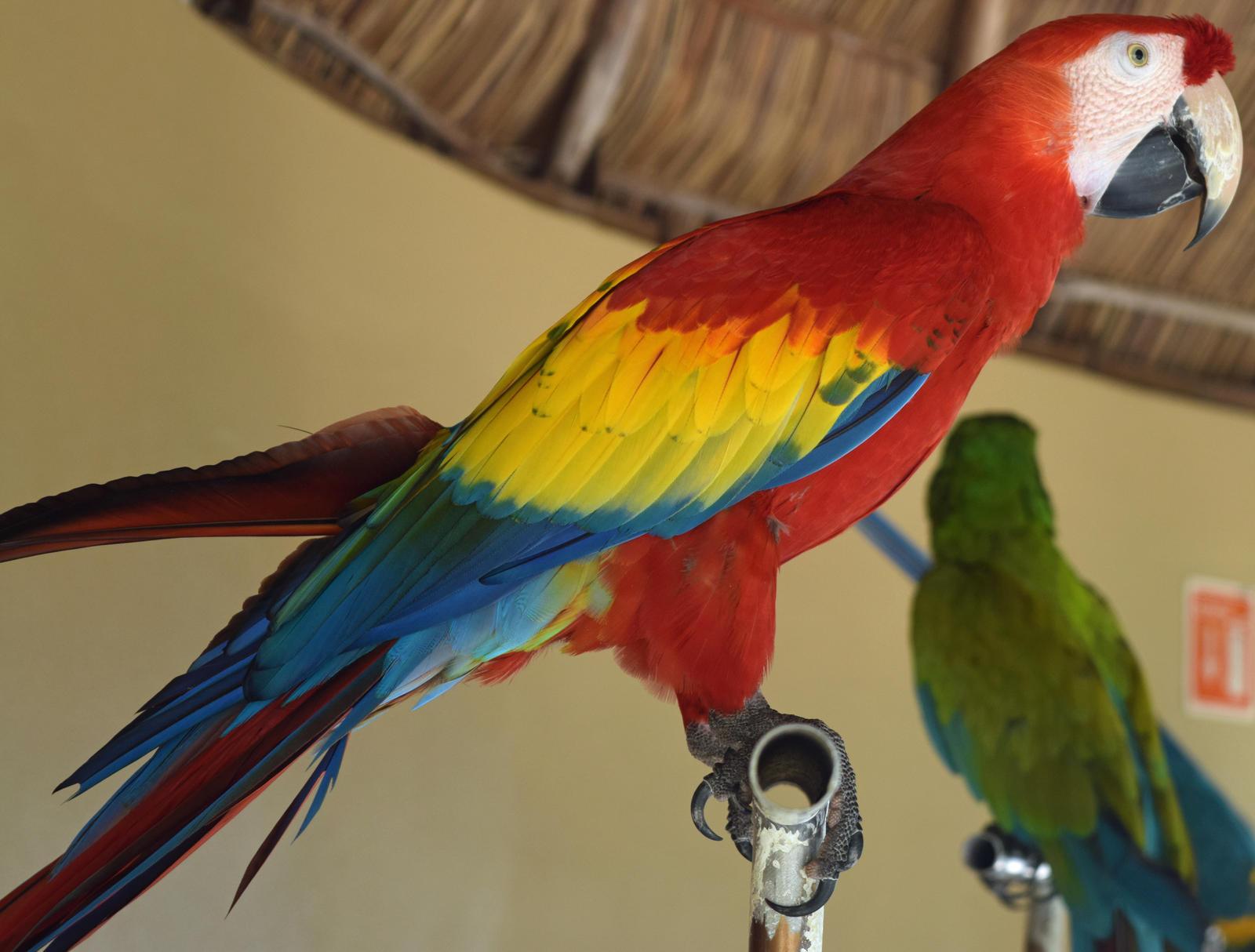 Roy G Biv, Macaw Style!