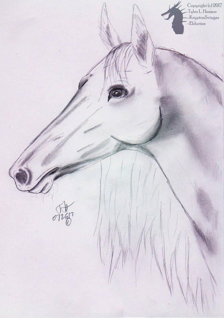 Horse head pencil sketch by kryptonsvingar