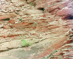 Zion National Park 2