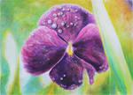 Flowers - 4