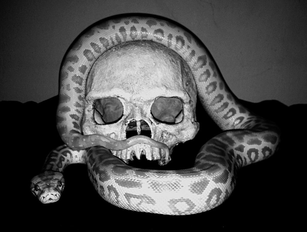 Souls for Belial by dead01