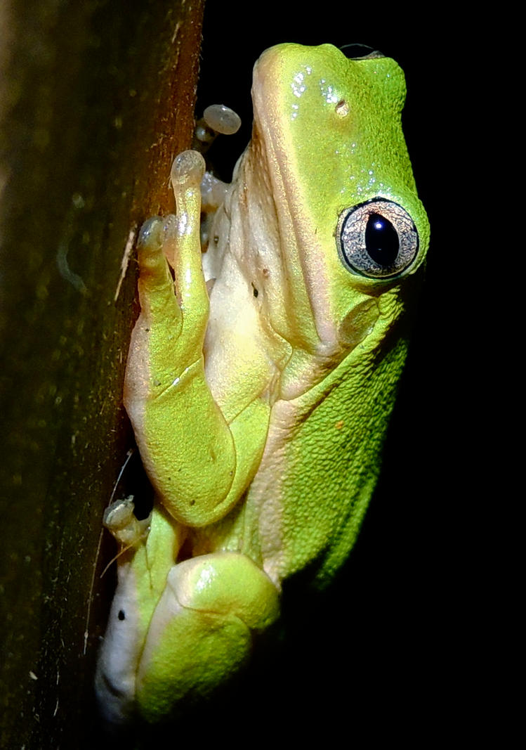 Froggy by irrationalrationale