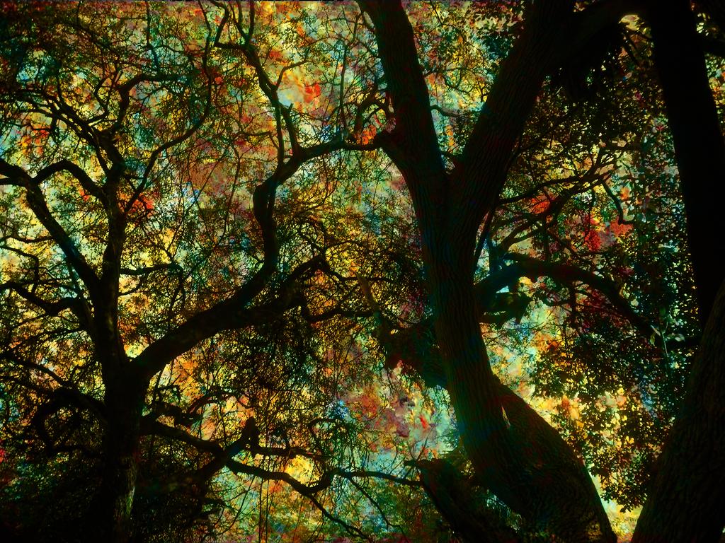 Trippy Trees by thegreatestmidget