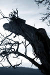 Dead Tree by RabeohneFluegel