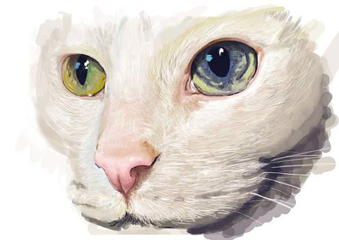 Estudio mirada felina