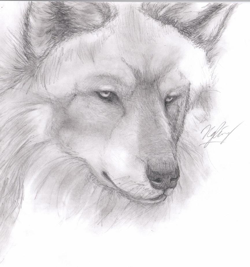 Wolf Pencil Drawing by TsukiPan on DeviantArt