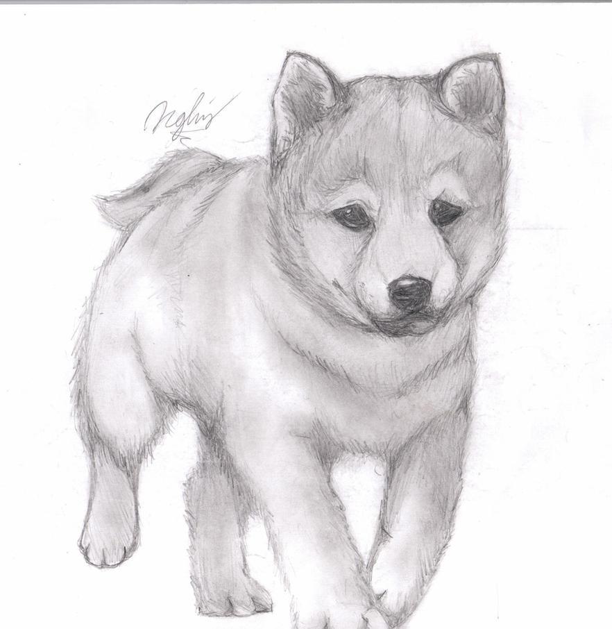 Puppy Pencil Drawing by TsukiPanCute Husky Puppy Drawings