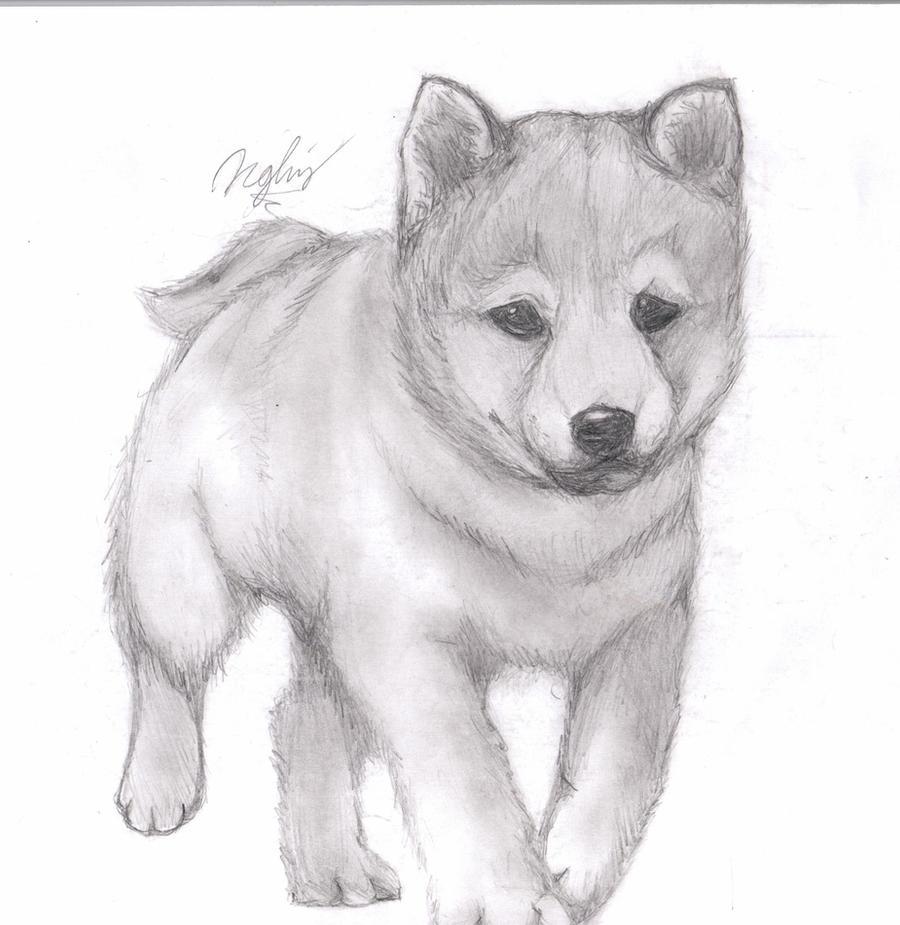 Животные рисунки карандашом онлайн
