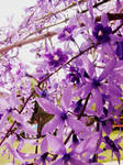 full of purple
