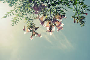 Pink flowers in the sky by chisa18