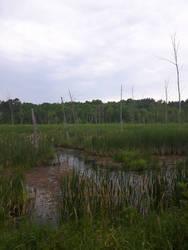 Rail Trail Marshland