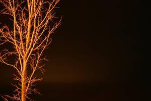 Phoenix Fire by Healer-Guy