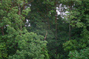 Rain Forest by Healer-Guy