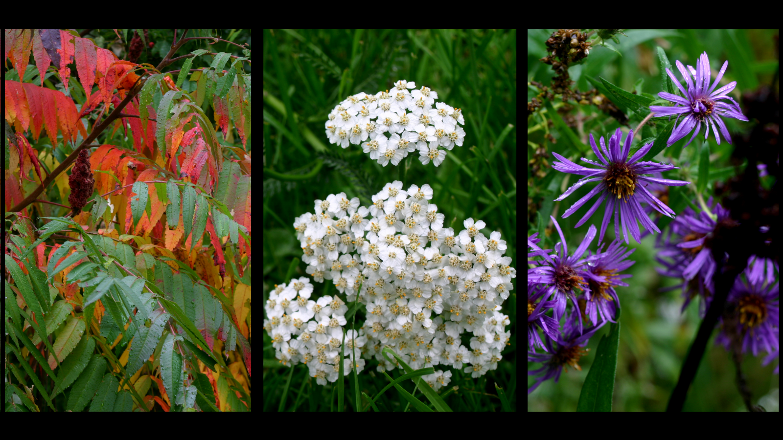 Autumn Flowers by Healer-Guy