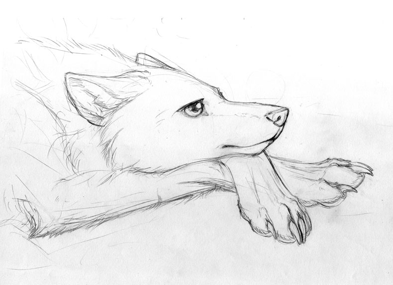 Wolf sitting down side view - photo#50