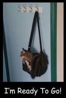 Handbag Kitten by Jianre-M