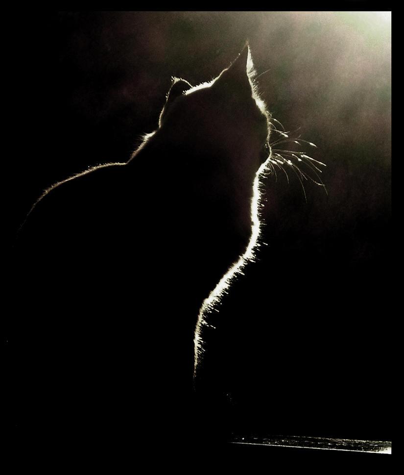 A luz e o gato by PateticaSoturna